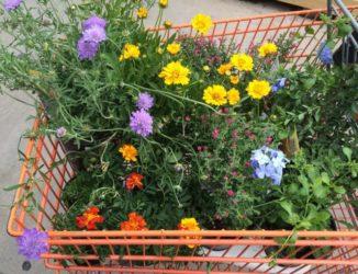 Gartencenter Vergleich & Übersicht