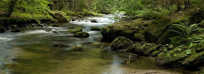 Mittelgebirgsbach im Nationalpark Bayerischer Wald, Foto: Uwe Reißenweber
