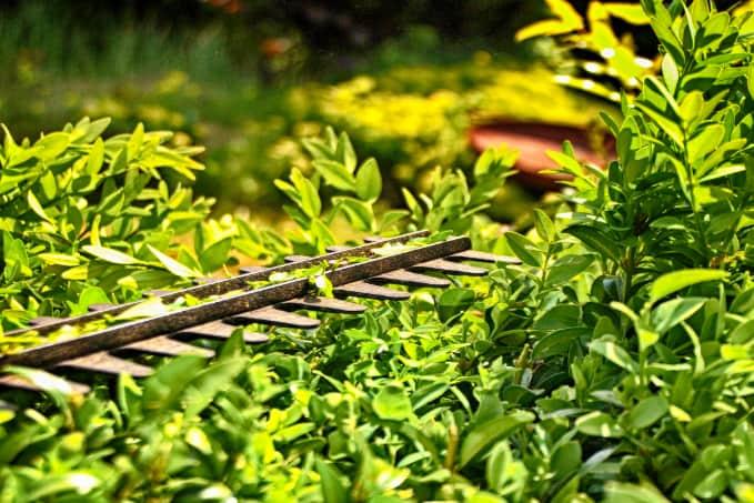 Heckenschnitt für Haus und Garten