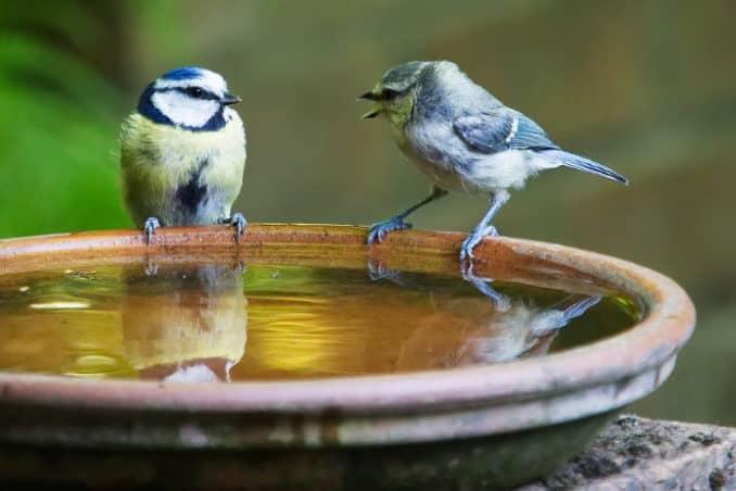 Vogelbad für den Garten