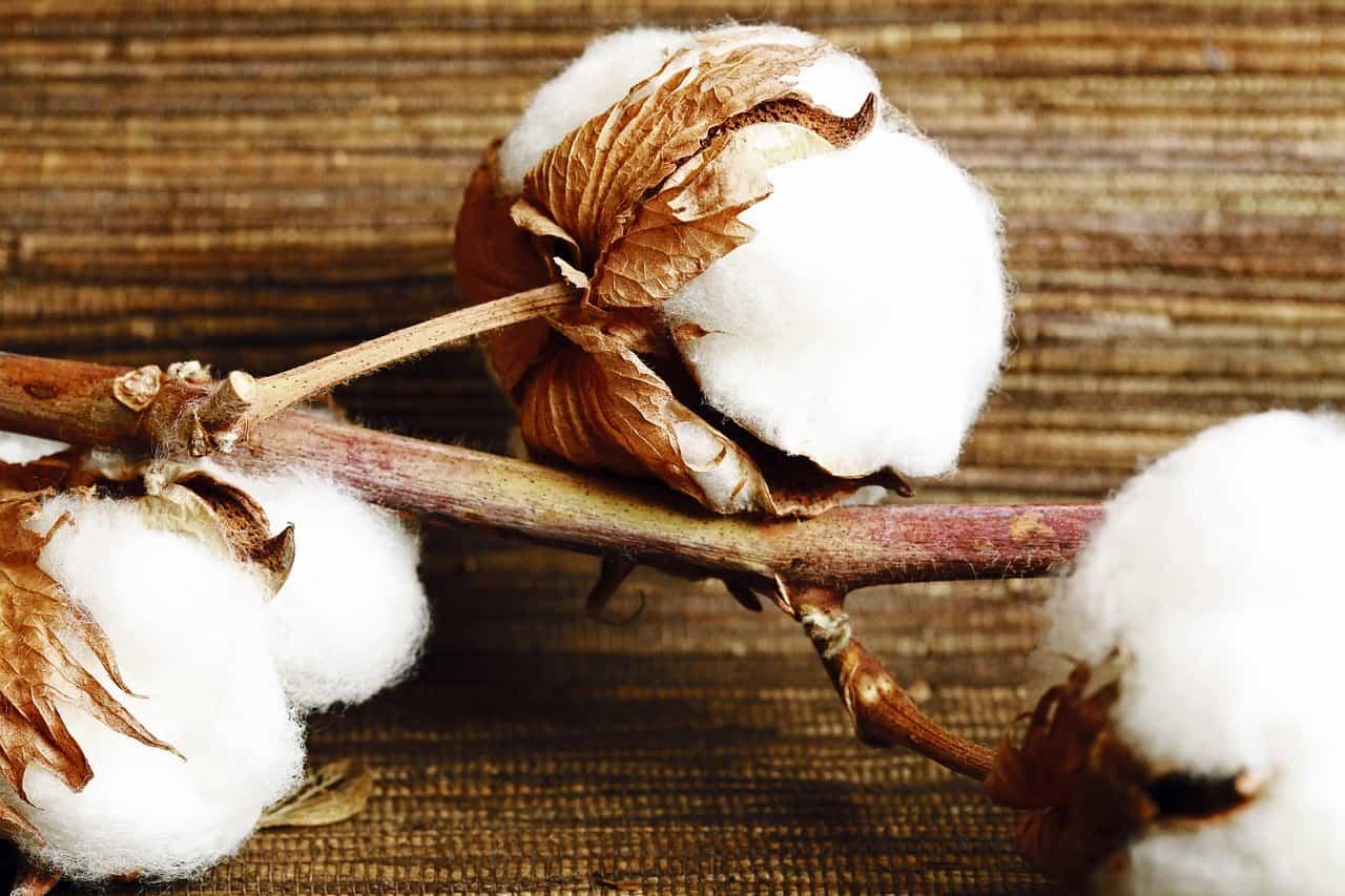 Baumwolle als Dämmstoff
