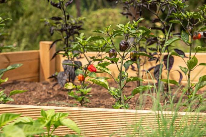 Hochbeet fuer den Garten