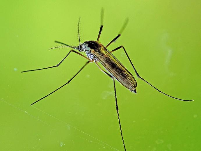 Mücken im Garten