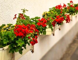 Pflanzschalen auf der Terrasse