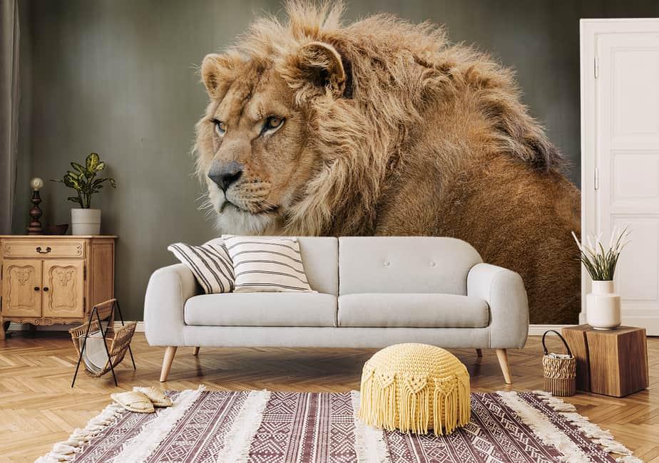 Fototapete Löwe Nahaufnahme im Wohnzimmer