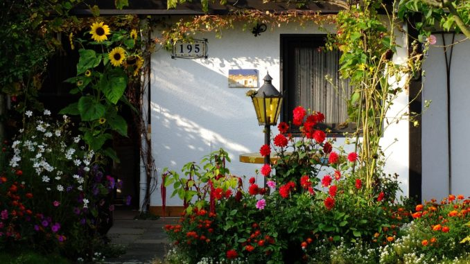 Blumen im Garten