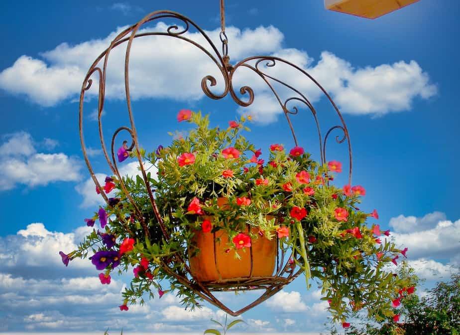 Hängepflanzen in Blumenampeln