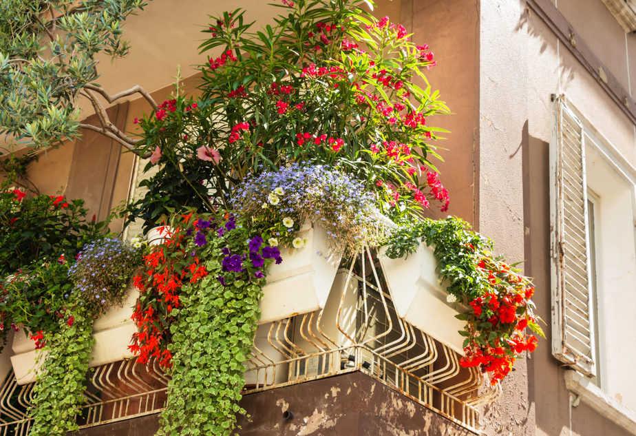 Hängepflanzen am Balkon ©Elenamedvedeva/depositphotos.com